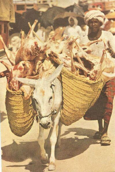 Berkas:انتقال گوشت قربانی در حج (۱۹۵۳میلادی.jpg